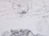 sleepy cat sketches