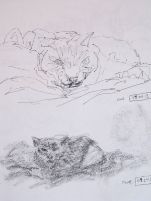 sleepy cat sketches